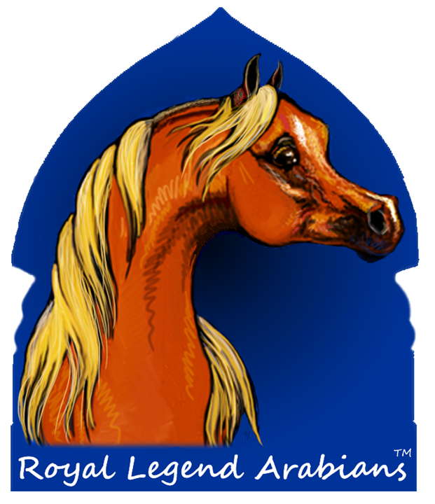 Royal Legend Horse Lessons Center and Straight                 Egyptian Arabians for Sale