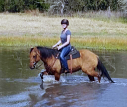 horseback riding in pond